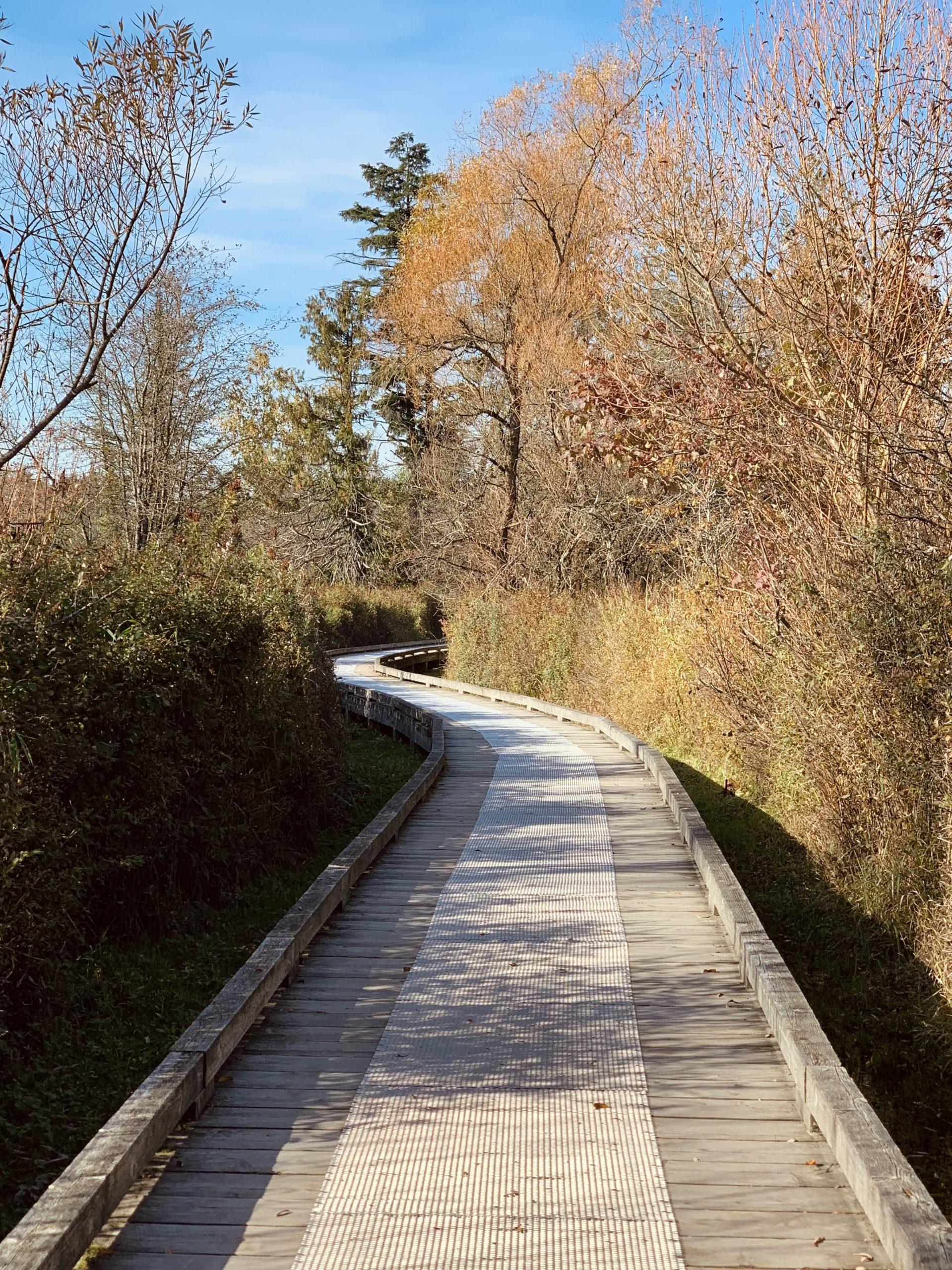 Deer Lake Walking Trail in fall