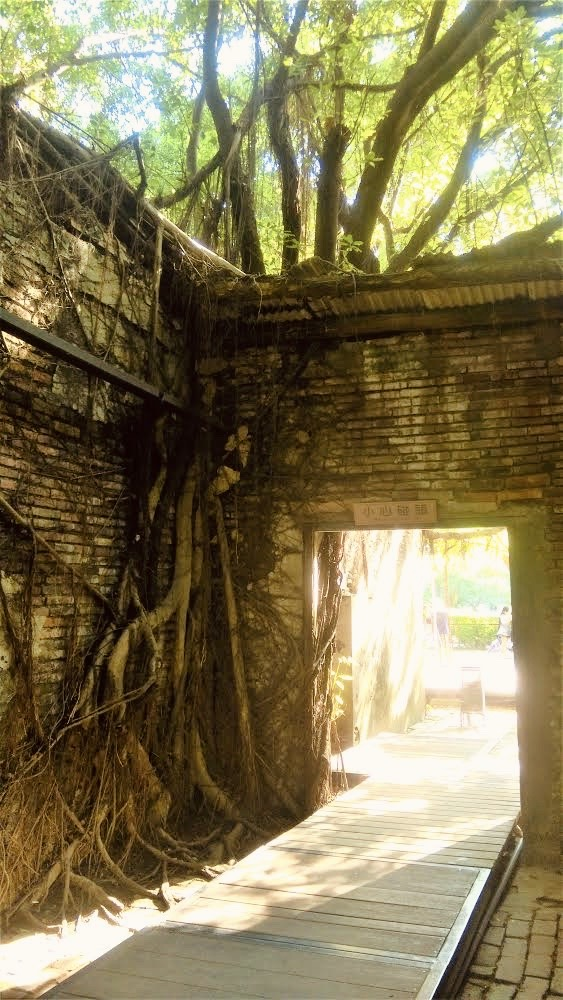 Banyan roots shade the Anping Tree House from the sun