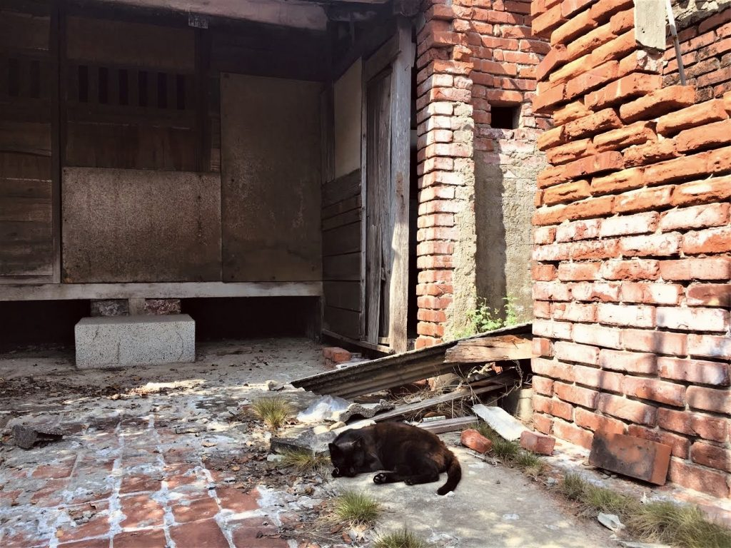 A black cat sleeps in the ruins of former dormitory in Luermen's Tainan cat village