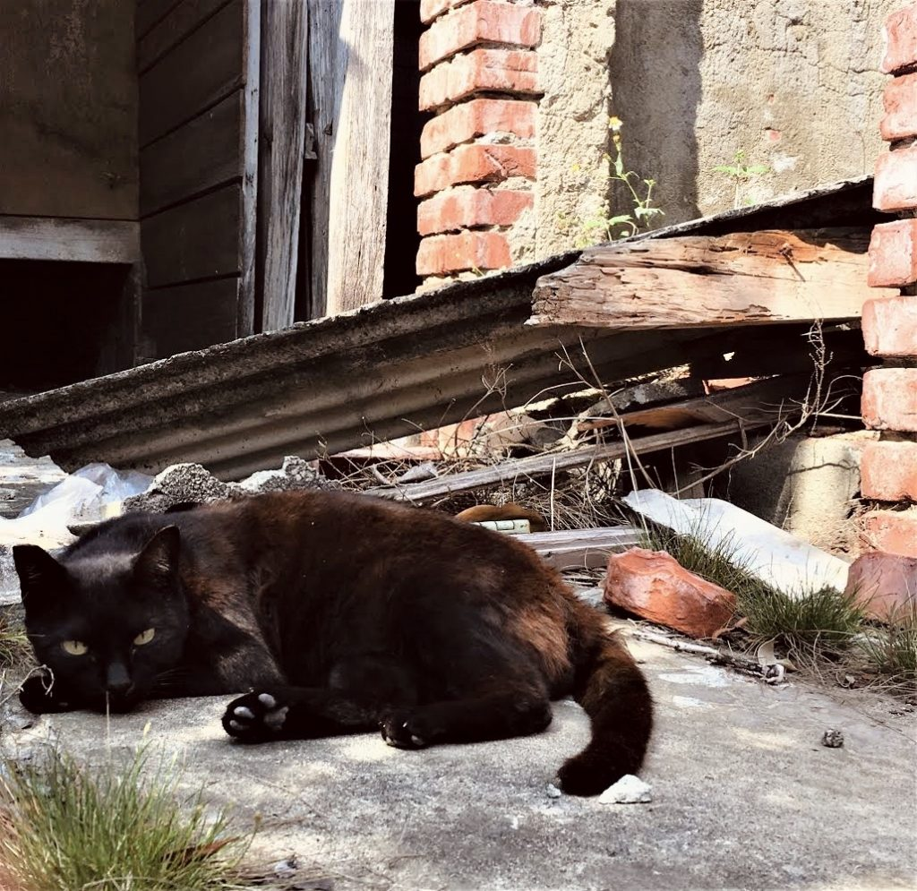 A black cat lazily lounges under the sun in Tainan cat village
