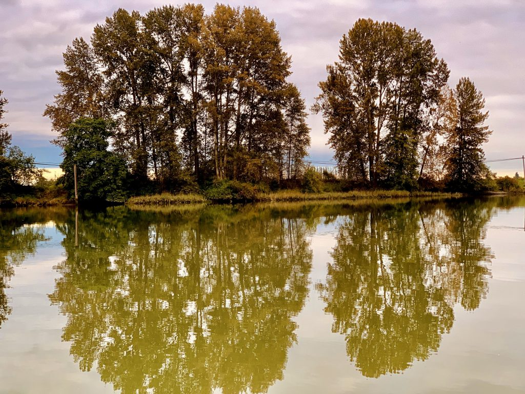 Reflections of trees on Deas Island in Delta