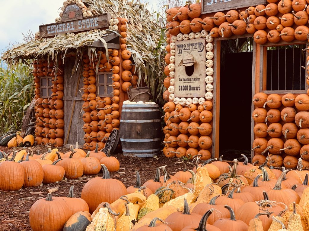 Pumpkin houses at Laity Pumpkin Patch in Maple Ridge