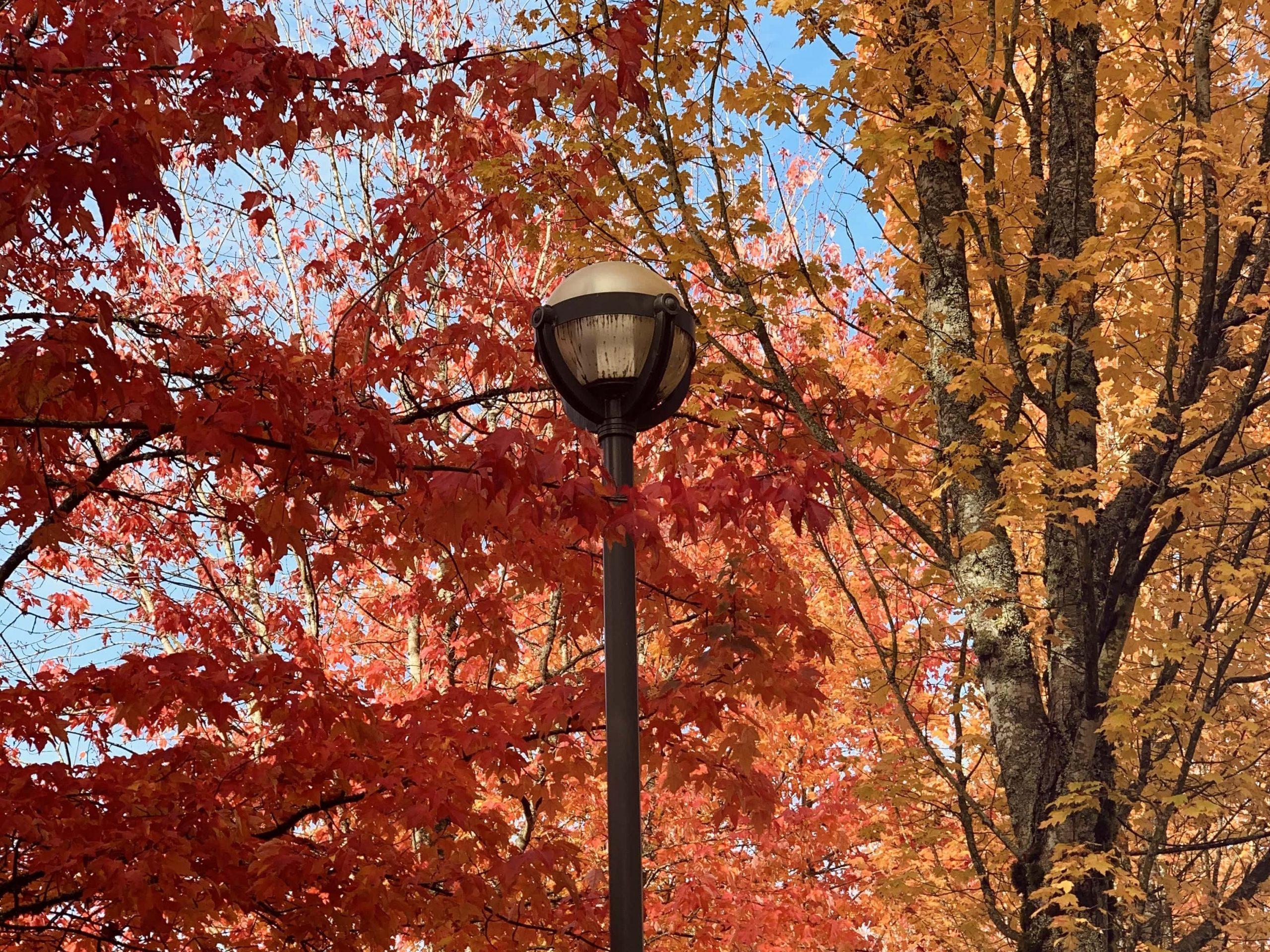Fall foliage at the University of British Columbia (UBC)