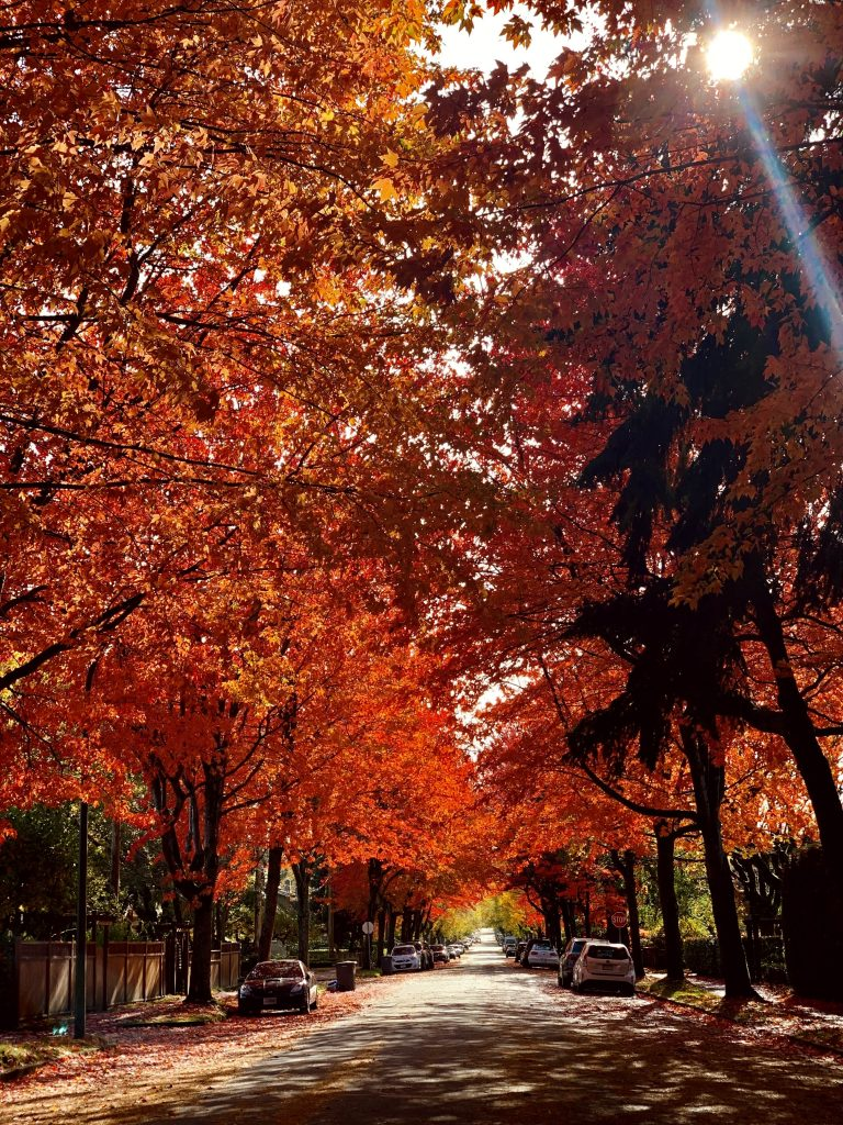 Fall colours lining the streets of Vancouver's Kitslano neighbourhood