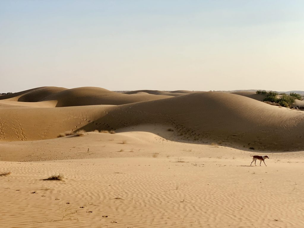 sand dunes in thar desert on rajasthan itinerary