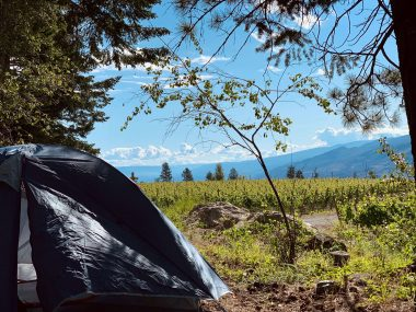 tent camping in vineyard in Peachland